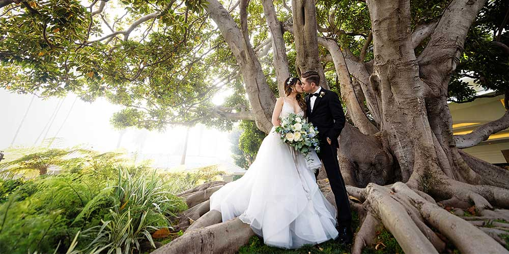 Bride and groom under the fig tree