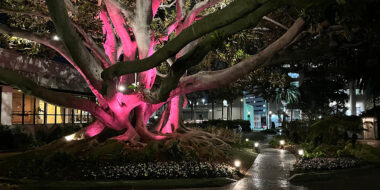 The Fairmont Miramar Turns Pink For Breast Cancer Awareness Month this October